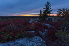 Evening in the Dolly Sods (Ken Krach Photography) Tags: westvirginia
