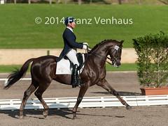 140502_Int_I_YH_GPS_7699.jpg (FranzVenhaus) Tags: sydney australia nsw newsouthwales aus equestrian dressage siec