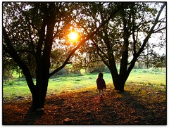 Passejant per Sta. Justa, Lli d'Amunt (Jess Cano Snchez) Tags: sunset espaa forest canon spain catalonia bosque catalunya ocaso catalua valles bosc postadesol espanya vallesoriental ocas powershotg3 elsenyordelsbertins barcelonaprovincia lliadamunt lavalldeltenes