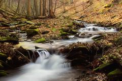 Callahan Run (1) (Nicholas_T) Tags: trees creek forest waterfall moss sprin