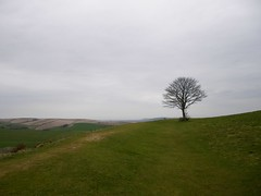 The Sussex Downs (sprinkling happiness) Tags: trees landscape sussex photo sussexdowns cissburyring