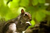 MoodCard_Set1-10 (what_u_see_is not_what_u_get) Tags: nature canon outdoors squirrel wildlife moocard frommobileme