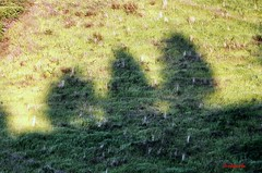 Maremma nascosta - Hidden Maremma (Jambo Jambo) Tags: italy italia tuscany cypress toscana grosseto maremma cipressi cinigiano nikond5000 jambojambo morbellovergari versacciediscorsucci