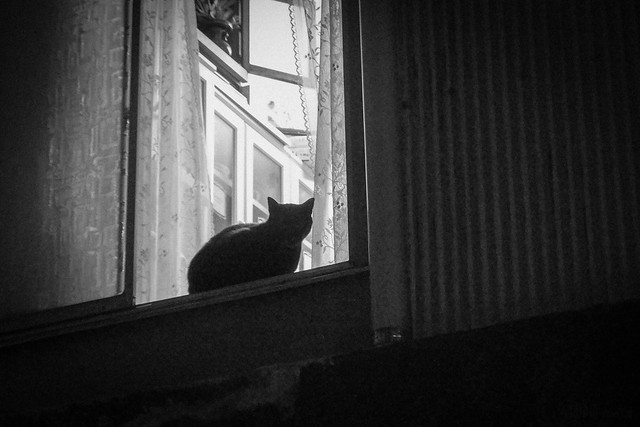 Today's Cat@2014-06-01