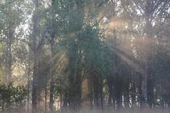 Morgensonne durchbricht den Bruchwald; Norderstapel, Stapelholm (8) (Chironius) Tags: stapelholm norderstapel schleswigholstein deutschland germany allemagne alemania germania германия niemcy nebel licht morgendämmerung morgengrauen утро morgen morning dawn matin aube mattina alba ochtend dageraad рассвет amanecer morgens dämmerung sonnenaufgang sunrise zonsopgang восходсолнца fog brouillard niebla landschaft