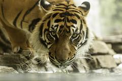 Jacksonville Zoo and Gardens 6-1-14 (RobBixbyPhotography) Tags: jacksonvillezooanimals