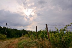 Clouds and vineyards () Tags: clouds photography photo vineyard nuvole foto photographer photos vineyards grapes fotografia uva vigne collina vite stefano fotografo monferrato trucco vigna zush d7100 stefanotrucco