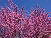 Primavera total (efe Marimon) Tags: flores arbol primaveratotal appleiphone4s felixmarimon