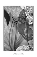 3402 29 (Adriana Füchter ... thank you for 12 Million View) Tags: fantasia play stage art canon design backstage concert costumes light drama adrianafuchter arte modelos roupas produtos travel rendaflora geniflora bw premio admitida salão admissão concurso adrianafüchter vintage retro antigo 接写 closeup valentine makrofotografie macro бразилия brazil brasil poesia poema 美しさ entomologia