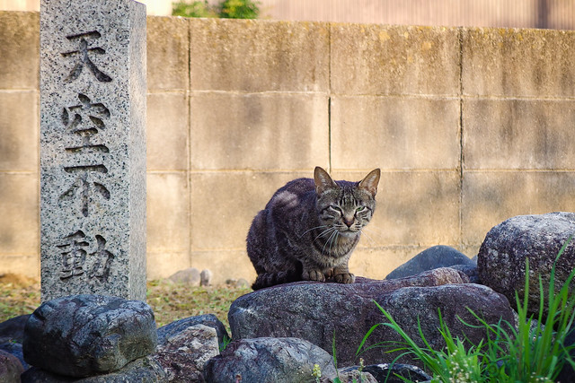 Today's Cat@2014-06-14