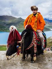 Я на тибетском яке