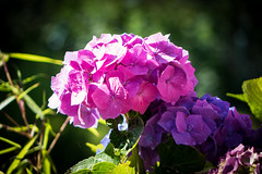 2014-07-19-Helmshagen-Garten-20140719-095713-i147-p0001-DSC-RX10-73.3_mm-.jpg