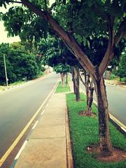 rvores na Avenida (junior_candyman) Tags: avenida paz rvores