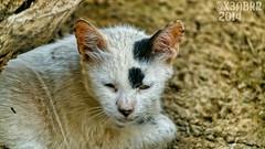 #قطة #تصويري في #الرياض #السعودية  #Takenbyme #ksa #cat #Coloredeyes #Saudiinstagram  #Colored #eyes #Colored_eyes #Coloredeyes #beatiful #bestsnaps #shotaward #sony_official #arab_photographers #photos #igs_photos  #phototag_it #500px #photo #عدستي #صورة (Instagram x3abr twitter x3abrr) Tags: blue green animal animals cat photo eyes photos takenbyme colored beatiful ksa صورة عدستي تصويري السعودية الرياض coloredeyes اخضر ازرق 500px قطة arabphotographers shotaward bestsnaps sonyofficial phototagit igsphotos saudiinstagram
