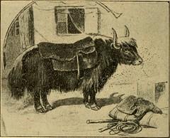 Anglų lietuvių žodynas. Žodis yak butter reiškia jako sviesto lietuviškai.