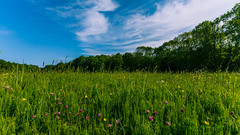 Nature calls (Serkan Onur) Tags: blue summer sky nature amsterdam clouds landscape outdoor flowersplants