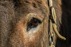 Donkey (brucegates) Tags: ontario canon donkey sudbury f56 400mm