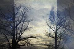 Tr zwischen Bumen (rosa_rusa) Tags: trees sky woman window skyline train rosarusa trenaregensburg trzwischenbumen puertaentrearboles