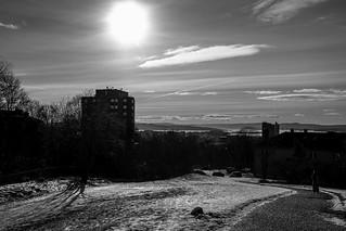 A monochrome winter
