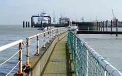Wächter auf der Brücke - Guards on the bridge (antje whv) Tags: cuxhaven norddeutschland northgermany brücken bridges geländer railings elbe hafen port möwen seagulls hafenviertel wasser schiff pier