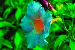 Glow (Rajavelu1) Tags: flowers plant green waterdroplets glow macrophotograph canonef100mmf28lisusmmacro canon60d art creative