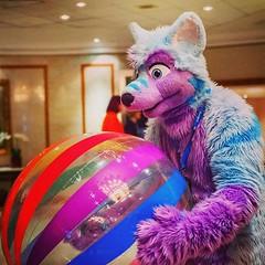 Wohooo just playing with my beach ball :3 #beachball #ball #fun #confuzzled #cfz #purple #blue #wolf (Keenora Fluffball) Tags: keenora fursuit furry kee