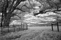 Dodsons (IR) (F. Neil S.) Tags: fence gate field grasses overhanging tree vines vista piedmont farmland dramaticclouds holeinthesky springday blackandwhite blancetnoir monochrome sony nex6 fullspectrumconversion neewer 850nm filter emount