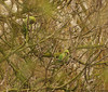 Parrots (Natali Antonovich) Tags: parrot aparrot birds belgium belgie belgique tervuren parallels