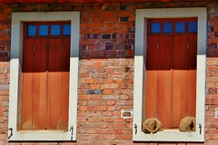 ninho de joão de barro (jakza - Jaque Zattera) Tags: jakza dois janela igual