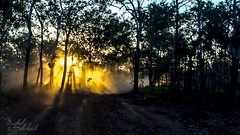 Dusty Tracks (Maikel van Schaik) Tags: maikel van schaik darwin australia northern territory aboriginal land 4wd dust dryseason blurry unsharp moving sunset rays bush trees travel nikon d600