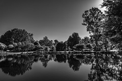 Reflections in tone (g0rsty) Tags: landscape lakes blackandwhite park trees reflection water waterreflections