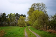 spring as it is (JoannaRB2009) Tags: spring green path nature tree trees road landscape view grass sarnów łódzkie lodzkie polska poland