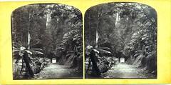Hobart Town Waterworks, Tasmania - 1860s (Aussie~mobs) Tags: cooksmonument ferntree bower hobart tasmania australia vintage 1860s stereoview townwaterworks charlesawoolley