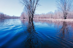 Jock River In Flood (deanspic) Tags: richmondfen fen photopaddle canoe canoeing paddle paddling spring wetland forest flooded floodedforest water river jockriver byfilter cpl g3x vfmc maple silvermaple trees flood rest resting sublime serene calm wake wakedistortion