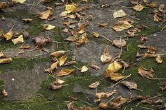 Mt Wilson 13 (trisharooni) Tags: australia autumn mtwilson breenhold