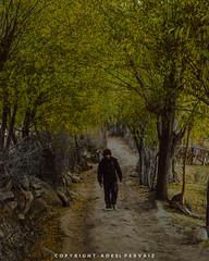 Autumnal Way (adeel.pervaiz) Tags: killermountain autumn colorburst pakistan autumnway beauty