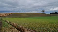 Nach und vor dem nächsten Regen (ludwigrudolf232) Tags: landschaft felder bewölkt