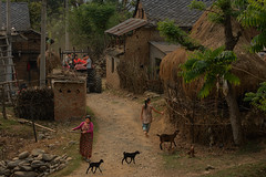 nepali village (still very busy, trying to catch up) Tags: village nepal nepali streetphotography streetlife streetscene ivodedecker travel goat outdoor