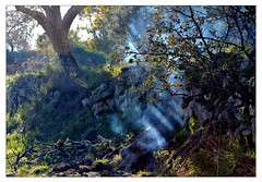 BBQ (me*voilà) Tags: landscape bbq fire smoke trees light sunrays ben