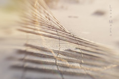 HFF Repair Needed (LanaScape Photos) Tags: select hff fence fencefriday happy sandfence gulfshores alabama lensbaby