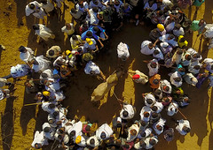 Aerial view of the slaughter of a bull during the Gada system ceremony in Borana tribe, Oromia, Yabelo, Ethiopia (Eric Lafforgue) Tags: aerial aerialview africa animal arab badhaasa boran borana borena bull celebration ceremony circle colourpicture cow crowd cruel culturalheritage cultures drone eastafrica ethdrone0317117 ethiopia gaada gada gadasystem gadaa horizontal hornofafrica oromia oromiya oromo outdoors sacrifice slaughter togetherness traditionalculture traditions tribalculture unesco unrecognizableperson yabello yabelo