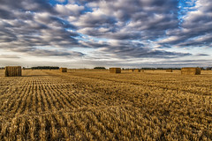 Harvest before the rain (mystero233) Tags: harvest field empty haystack cubes sky clouds dramatic autumn latesummer 2016 outdoor landscape uk england britain greatbritain gb cambridgeshire papworth