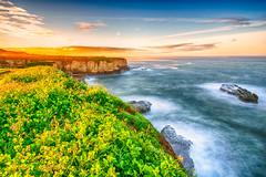 Morning Glow (stuanderson7) Tags: pacific ocean sunrise flowers cliffs dawn outdoor clouds california vibrant green sonya6000 nature morning water sky seascape landscape coast samyang12mmf2 pacificocean longexposure nopeople westcoast