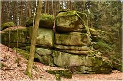 versteinert (mayflower31) Tags: steine stones wald forest laub frühling spring
