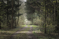 my way - OLYMPUS PEN E-PL8 (Andreas Voegele) Tags: olympus olympuspen penepl8 epl8 andreasvoegelephoto light color forest search green wald licht landscape pen