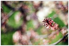 Spring bokeh (Christos Theofilogiannakos) Tags: nikonf90x afnikkor1850d fujicolor fujicolorc200 35mm film
