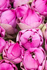 Pink Lotus Flowers (Five Second Rule) Tags: phnompenh 2017 cambodia pink flowers lotusflowers prayer offerings religion closeup beauty petals