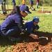 Highland_Renaissance_Tree_Planting_Event_2017 (53)