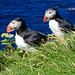 Two+Puffins+-+L%C3%A1trabjarg