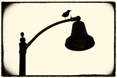 Stakeout.... (Joe Hengel) Tags: stakeout danapoint bw blackandwhite monochrome frame 7dwf socal southerncalifornia goldenstate theoc orangecounty oc outdoor light lightpost bird